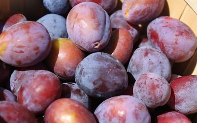 Conseils pour bien conserver et cuire vos prunes